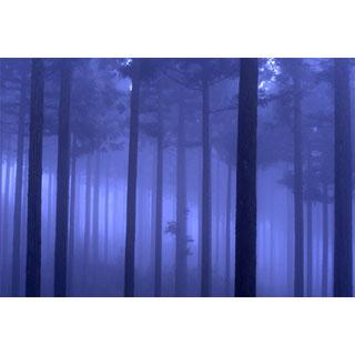 ポストカード【霧が覆う木々の中】*b_c