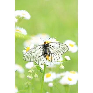 ポストカード【天使の翅】* 輝く小さな命たち