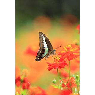 ポストカード【しっとりと・・・花に華】* 輝く小さな命たち
