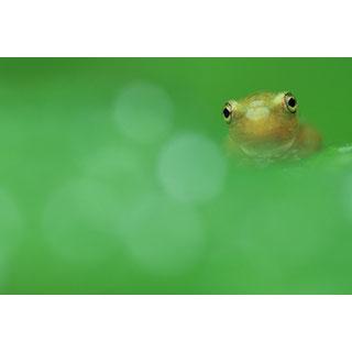 ポストカード【水丸ちゃん】* 輝く小さな命たち