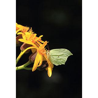 ポストカード【黄色い葉っぱさん】* 輝く小さな命たち