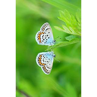 ポストカード【水鏡チョウチョ】* 輝く小さな命たち
