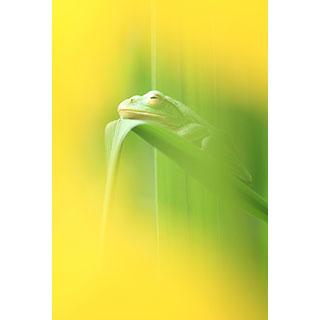ポストカード【快眠】* 輝く小さな命たち