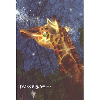 ポストカード【missing you.】*LIBE