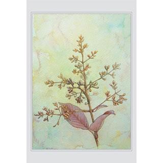 ポストカード【flowering plant】*西川 ケイコ