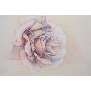ポストカード【pink-rose】*西川 ケイコ